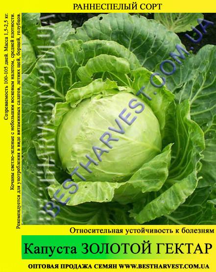 Семена капусты Золотой Гектар 0,5кг, белокочанная