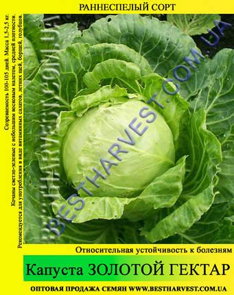 Семена капусты Золотой Гектар 0,5кг, белокочанная, фото 2