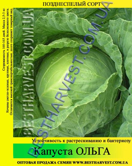 Семена капусты Ольга 10 кг (мешок)