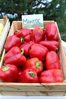 Перец сладкий Минтос F1 500 семян