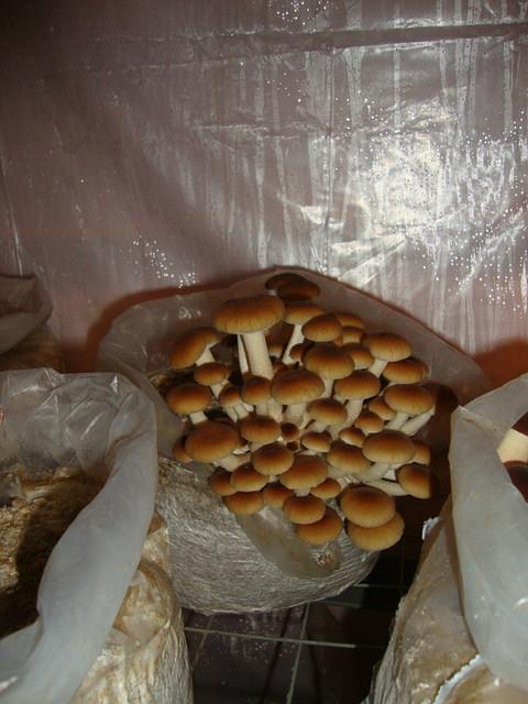 Блок для выращивания экзотических грибов
