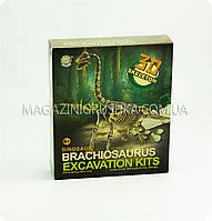 Набор юного археолога - Раскопки брахиозавра, фото 1
