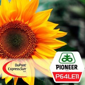 Семена подсолнечника П64ЛЕ11 Пионер (P64LE11 Pioneer)