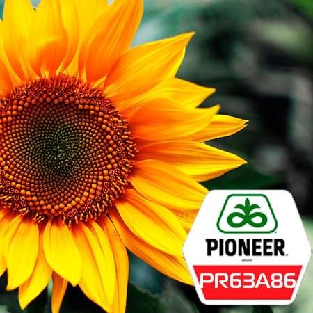 Семена подсолнечника ПР63А86 Пионер (PR63A86 Pioneer)