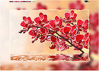 """Схема для вышивки бисером на подрамнике (холст) """"Букет орхидеи"""""""
