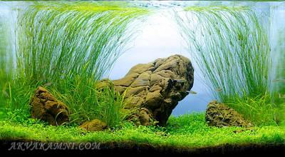 Композиції для акваріума