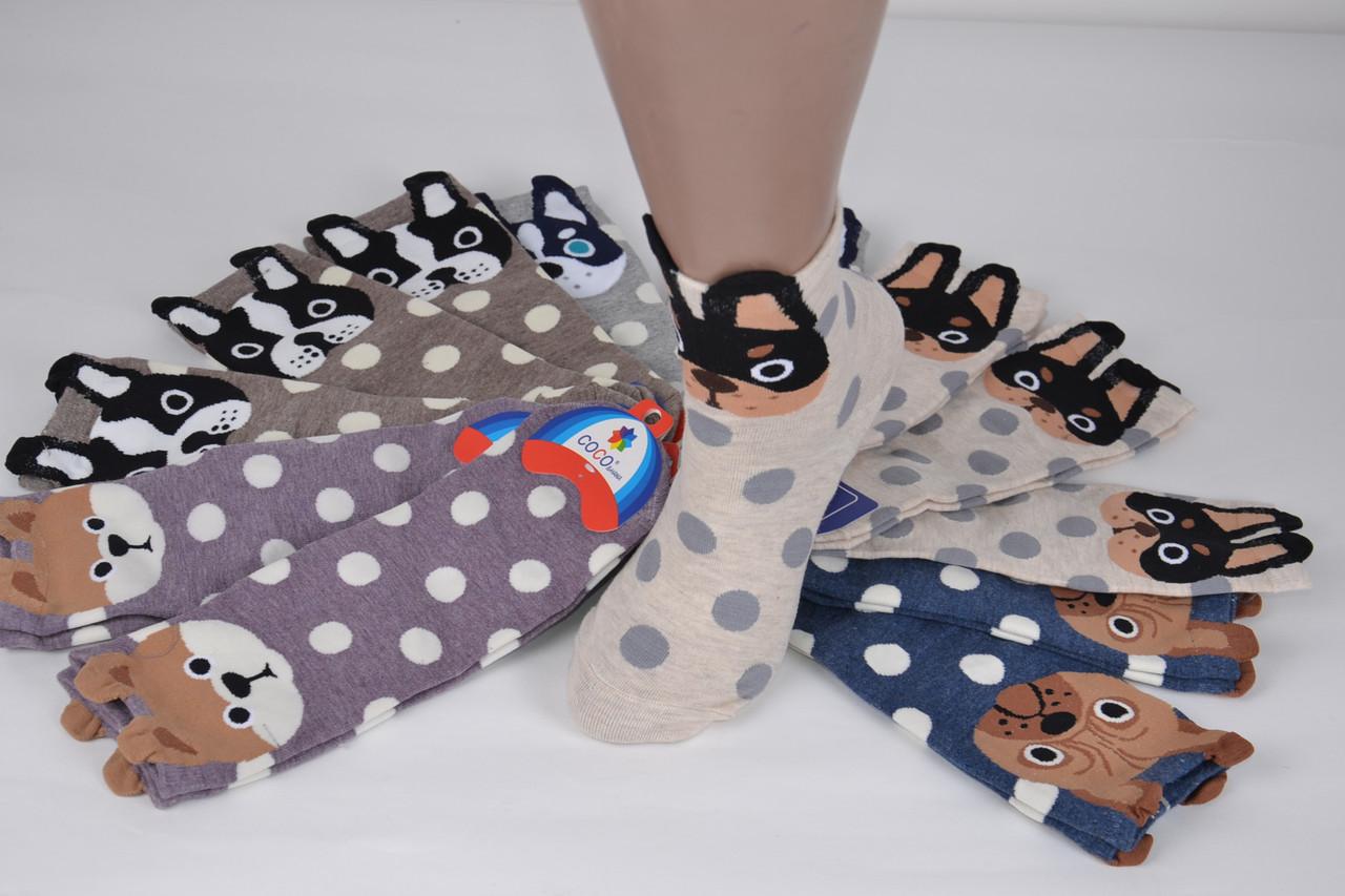 Женские носки Собачки (SL6143) | 12 пар