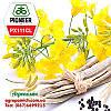 Семена Рапса ПХ111КЛ Пионер (PX111CL Pioneer)