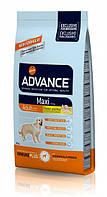 Корм (Эдванс) Advance  Dog Maxi Adult - корм для взрослых собак крупных пород 18 кг