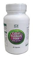 Коралл Бурдок Рут (Coral Burdock Root) очищает кровь и убирает воспаления ЖКТ, №90