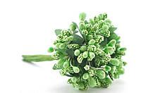 Сложные тычинки салатовые