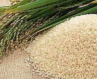 Масло зародышей риса 100 мл