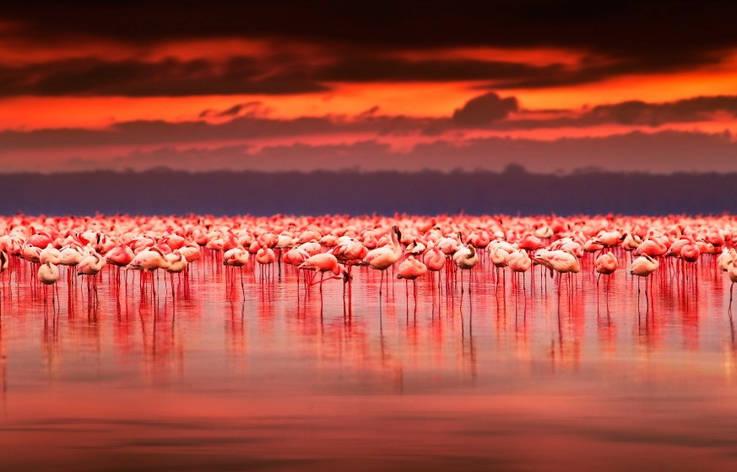 Фотообои Розовые фламинго, фото 2