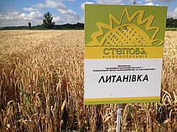 Семена озимой пшеницы Литановка (Елита)
