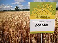 Семена озимой пшеницы Повелия (Еліта)