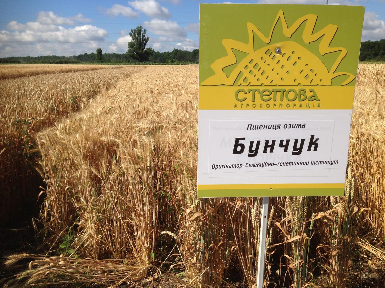 Семена озимой пшеницы Бунчук (Элита)