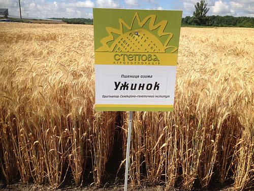 Семена озимой пшеницы Ужинок (Супер Элита)