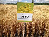 Семена озимой пшеницы Вдала (1 репродукция), фото 1