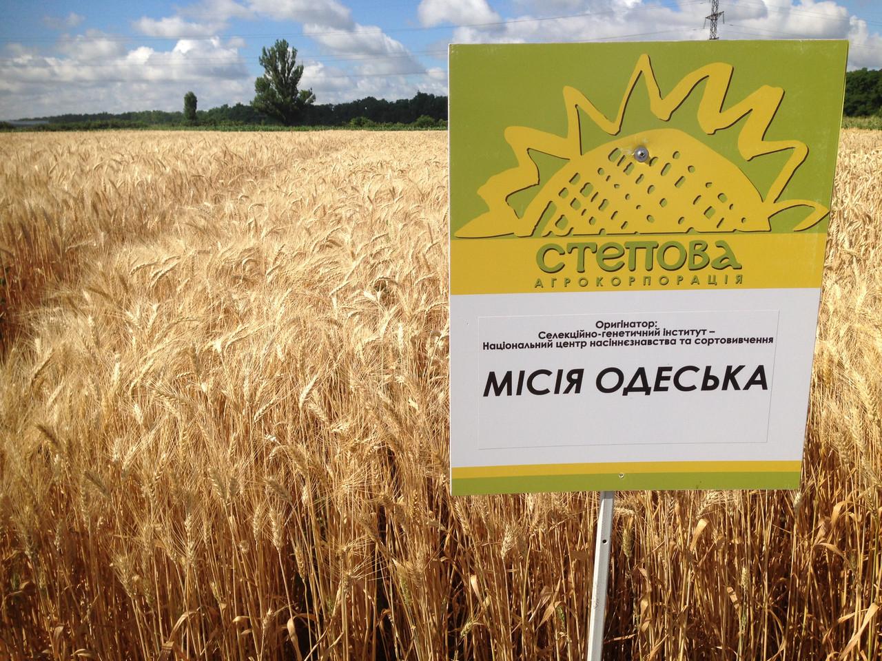 Семена озимой пшеницы Миссия Одесская (1репр.)