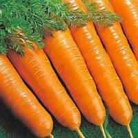 Семена моркови Флакко урожайный сорт, урожай 2016год