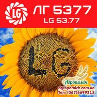 Семена подсолнечника ЛГ 5377 LG 5377