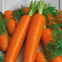 Семена моркови Перфекция, долго хранится.