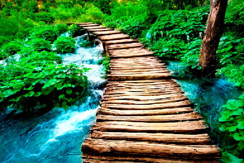 Фотообои Дорога к реке