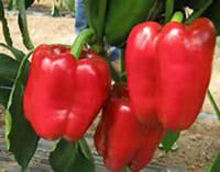 Семена перца Красный рыцарь F1 8 шт.