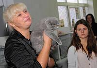 Шотландские котята - ринг у эксперта