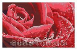 """Схема для полной зашивки бисером """"Цветок любви"""""""