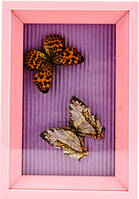 Картина две бабочки в разноцветных рамках 110х160х30