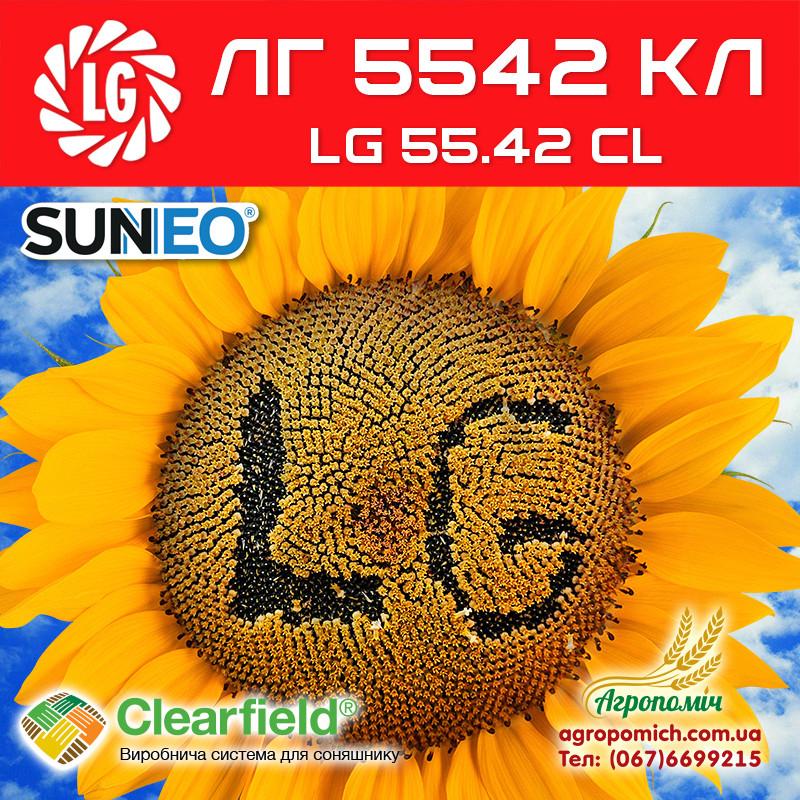 Семена подсолнечника ЛГ 5542 КЛ (LG 5542 CL)