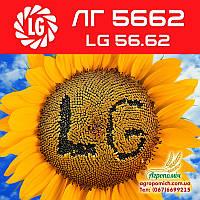 Семена подсолнечника ЛГ 5662 (LG 56.62)