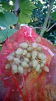 Сетка на виноградна 2 кг, 22*30 см от 100 шт (от ос,мошек и других насекомых)