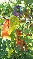 Сетка-мешок на виноград 2 кг, 22*30 см от 500 шт (От ос, мошек и других насекомых)