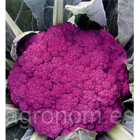 Cемена капусты цветной Пурпурна Сицилийская 500 грамм Kouel