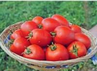 Семена помидора Намиб F1 15 шт. детерминантный