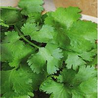Cемена кориандра Американо 100 семян Kouel