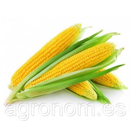 Cемена кукурузы Голдей  500 грамм Kouel