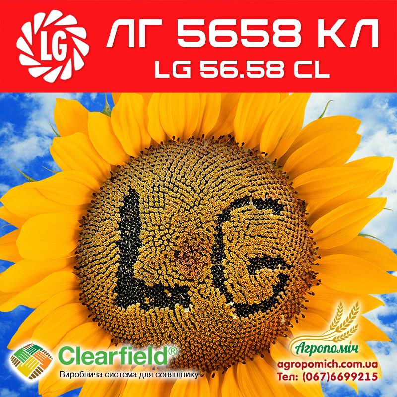 Семена подсолнечника ЛГ 5658 КЛ (LG 56.58 CL)
