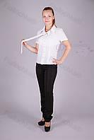 Блуза молодежная 3400-470/3 оптом от производителя