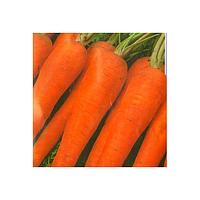 Cемена моркови Флакко 500 грамм Kouel