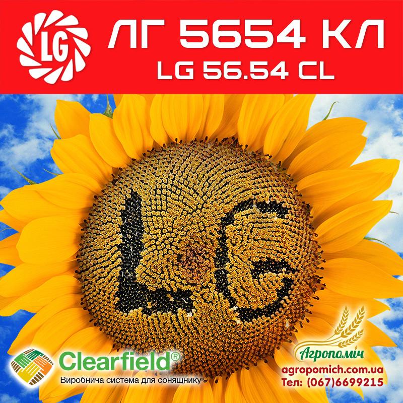Семена подсолнечника ЛГ 5654КЛ (LG 56.54 CL)