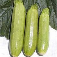 Семена кабачка Чаклун (урожайный)