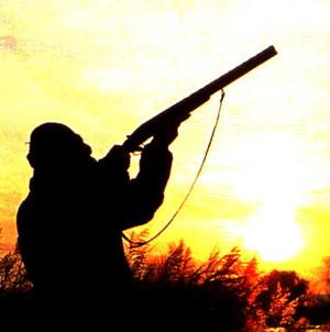 Спорт и охота