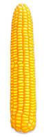 Насіння кукурудзи Кремінь 200 СВ (ФАО 210)