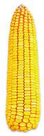 Семена кукурузы Подольский 274 СВ (ФАО 270)