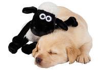 Мягкие и деревянные игрушки для собак