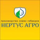 Кукуруза Гибрид HC-101 (ФАО 190)