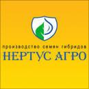 Кукуруза Гибрид HC-2612 (ФАО 280-300)